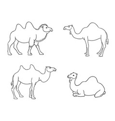 Camels in contours vector