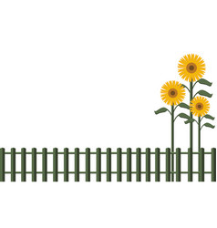 background fence and sunflowers vector image