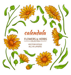 Calendula elements set vector