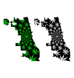 Chicago city - map is designed cannabis leaf vector