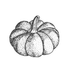 pumpkin sketch isolated on white background vector image
