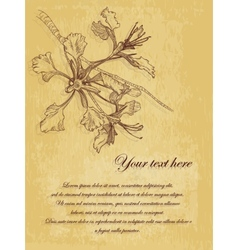flower vintage postcard with place for text vector image