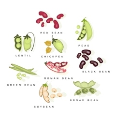 Bean Cultures With Names Set vector image
