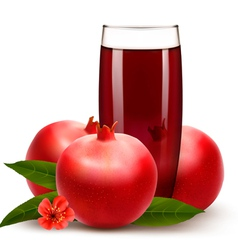Glass of pomegranate juice with fruit vector image
