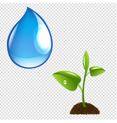 plant with water drop vector image