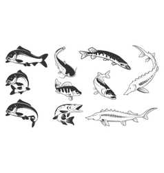 Set of river fish marks river carp vector
