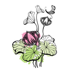 lotus and the lotus leaf with dragonfly vector image vector image