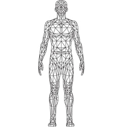 Wire Frame MAN vector