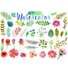 watercolor aquarelle flowers and leaves vector image vector image