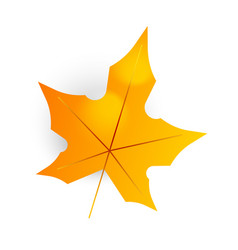 autumn leaf maple leaf isolated on a white vector image
