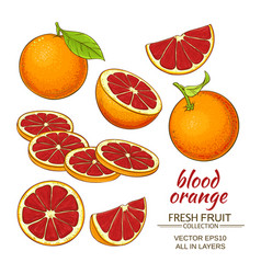 Blood orange fruit vector