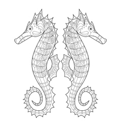Sea horse coloring for adults vector image
