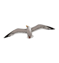 seagull from a splash watercolor colored vector image
