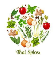 Thai herbs and spices cooking ingredients vector