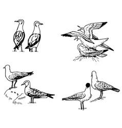 bird larus vector image vector image