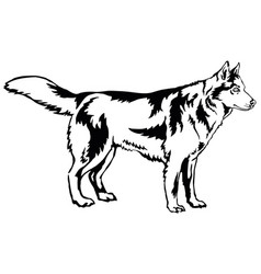 Decorative standing portrait of dog siberian vector
