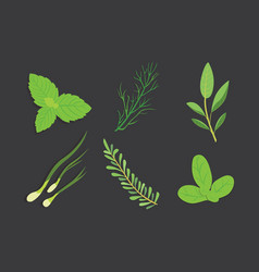 set of drawing herbs and flowers isolated vector image
