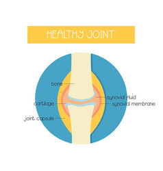 A healthy knee joint vector