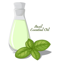 Basil essential oil vector image