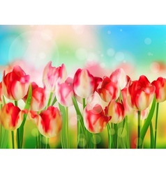 Easter spring background with tulips EPS 10 vector image