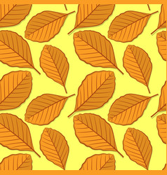 seamless pattern with beech autumn leaves vector image