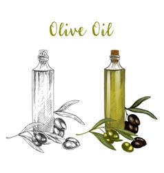 sketched branch of olive oil in glass bottle vector image