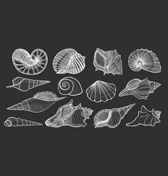 beautiful mollusk sea shells vector image