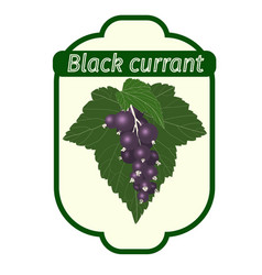 Black currant label vector