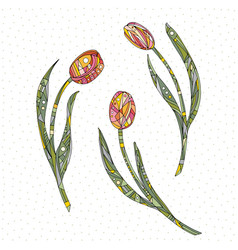 tulips hand drawn flowers vector image