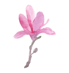 Watercolor magnolia vector