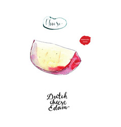 watercolor piece of dutch edam cheese vector image
