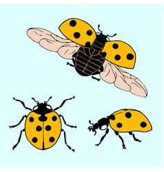 set of hand drawn ladybug in different positions vector image