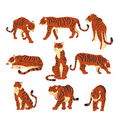 powerful tiger in different actions set of cartoon vector image vector image