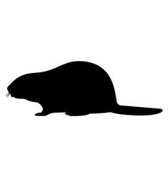 black silhouette a beaver vector image