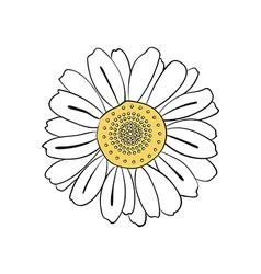 hand drawn daisy vector image