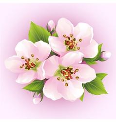 Japanese cherry tree blossoming branch of sakura vector image