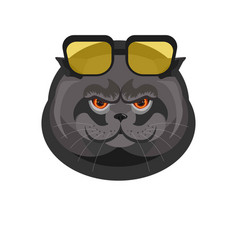 black cat with sunglasses portrait isolated on vector image vector image