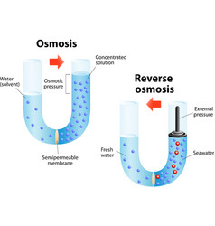 Osmosis and reverse osmosis vector image vector image