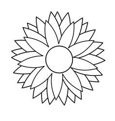 outline flower natural decoration delicate vector image