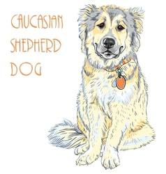 Caucasian Shepherd Dog breed vector image