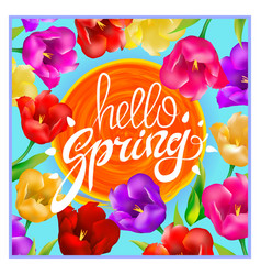 hello spring colotful tulips flowers background vector image