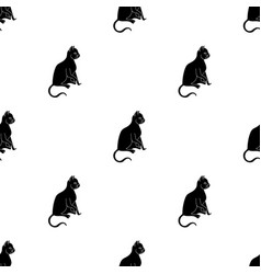 American shorthair icon in black style isolated on vector