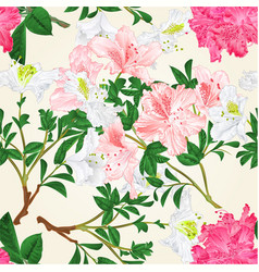 seamless texture white and pink rhododendrons vector image