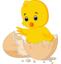 Cracked egg with cute bird inside vector