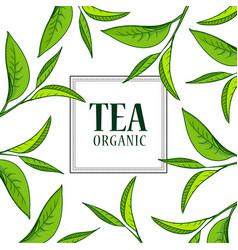 organic tea frame vector image vector image