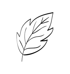 Beautiful leaf in black and white vector