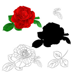 red rose simple stem with leaves vector image