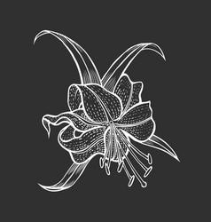 vintage floral lily vector image