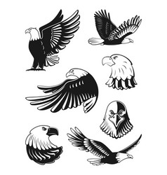 monochrome set of eagles vector image vector image