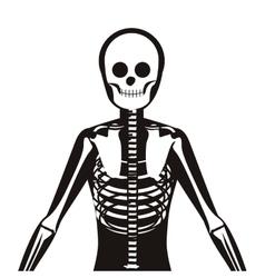 half body silhouette system bone with vertebrae vector image